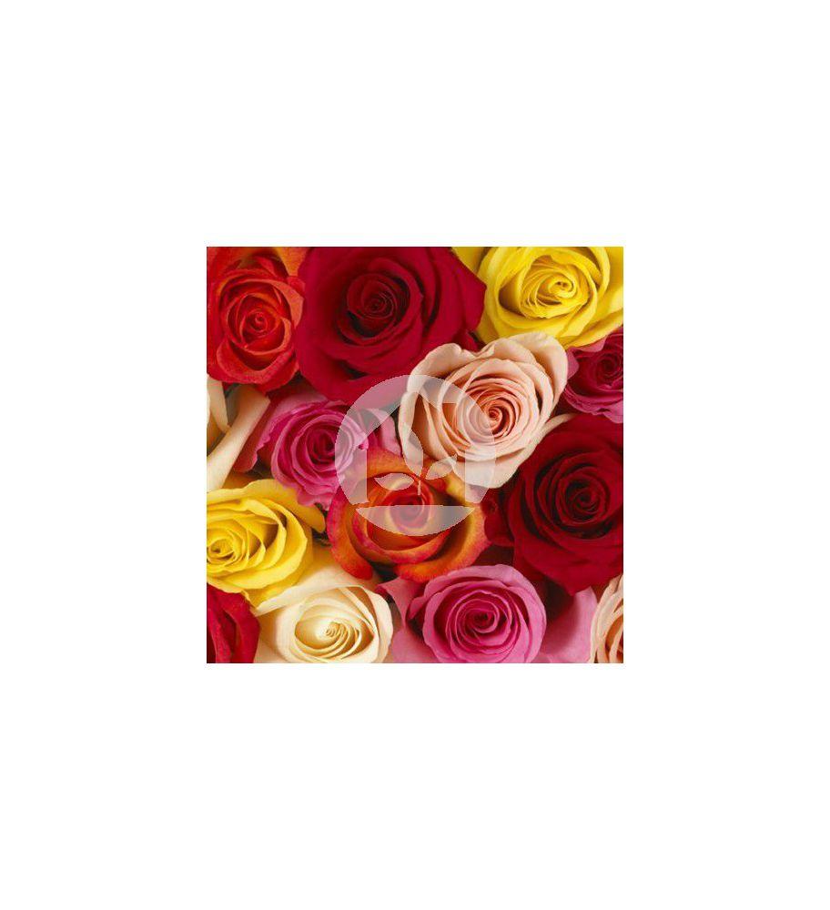 Rosa color mixto 25 unidades 40 cm