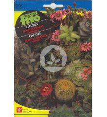 Cactus y Plantas Crasas Variadas